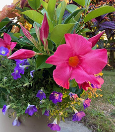 Flowers, Organic Fruits and Vegetable. Specializing in Shade Gardens